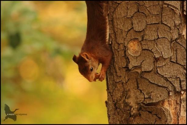 Comiendo tan tranquila colgando del árbol (23-9-2015)