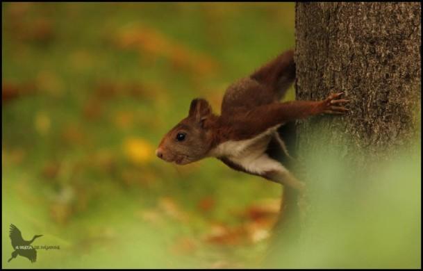 Ardilla agarrada a un tronco (23-9-2015)