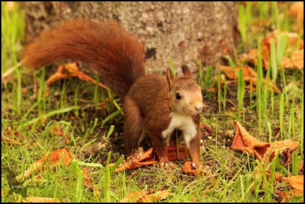 Ardilla en el jardín (23-9-2015)