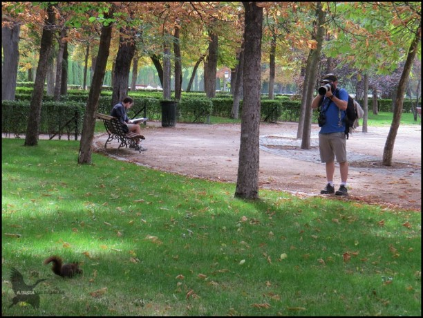 Fotografiando una ardilla (23-9-2015)