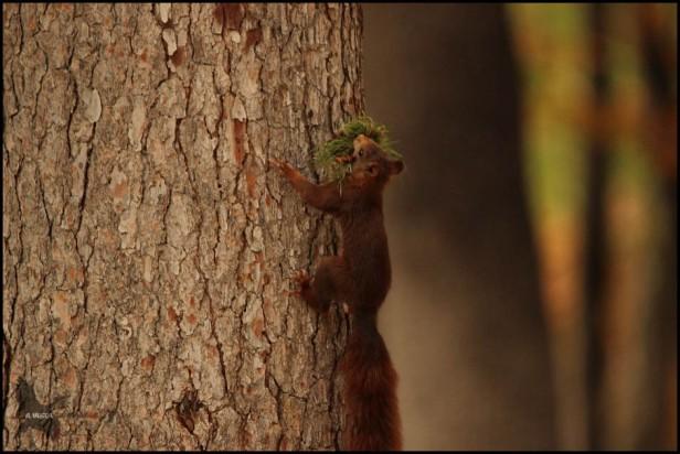 Subiendo al árbol (23-9-2015)