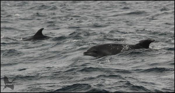 Delfines en su hábitat (18-10-2015)
