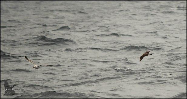 Pagalo volando a ras de agua (25-10-2015)