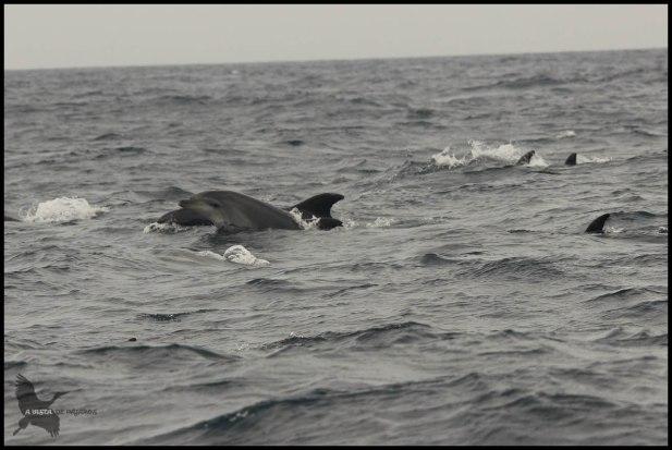 Delfines saltando (18-10-2015)