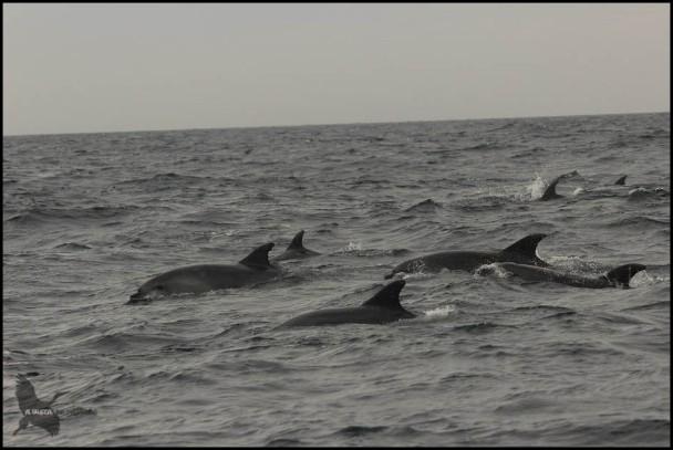 Nadando un buen grupo (18-10-2015)
