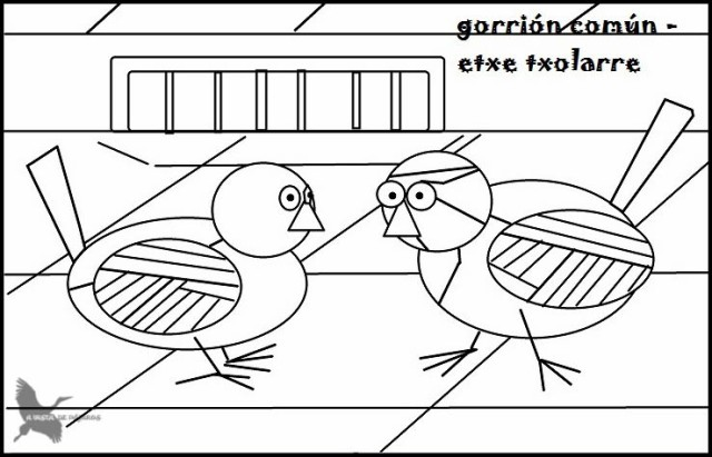 Gorrión2