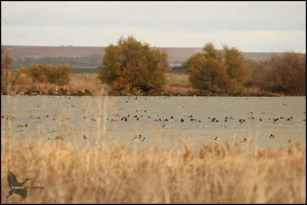 La Nava con variedad de aves (28-10-2015)