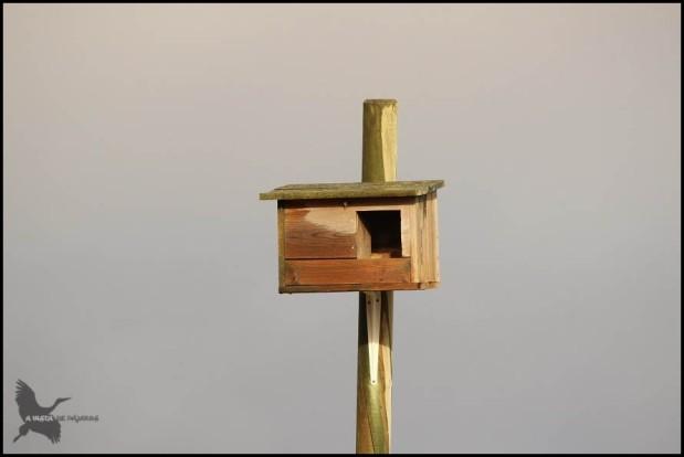 Caja nido (28-10-2015)