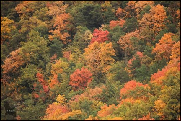 Zona boscosa cercana a Jaca (13-10-2015)