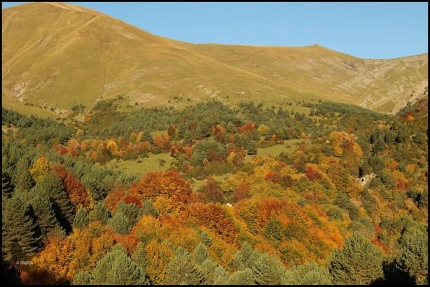 Bosques en lo bajo y pastizales en lo alto... (15-10-2015)