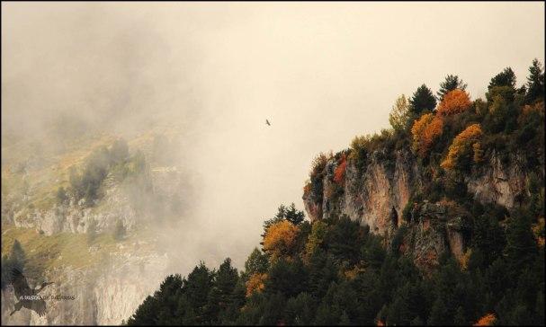 Quebrantahuesos en la niebla (13-10-2015)