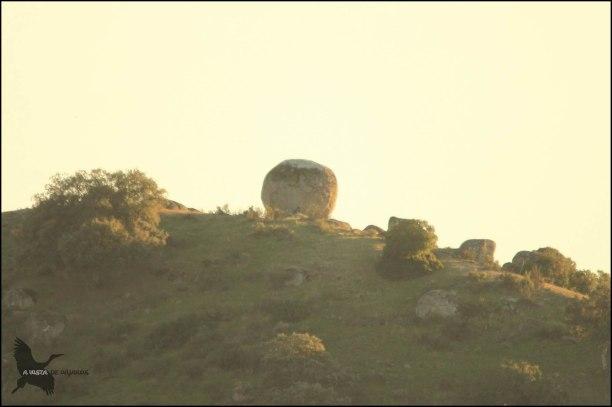 Lince en la piedra redonda... ¿lo veis? (5-12-2015)