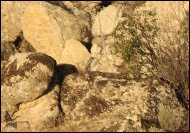 Las orejillas (8-12-2015)