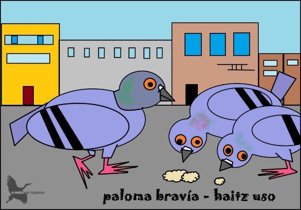Paloma bravía - Haitz uso