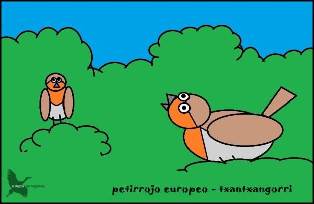 Petirrojo europeo - Txantxangorri