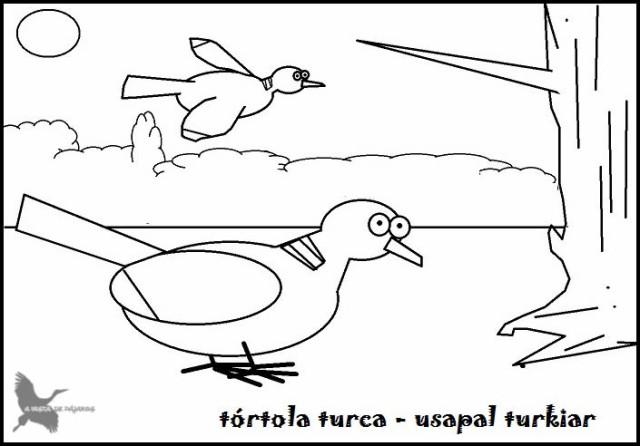 tórtola (2)