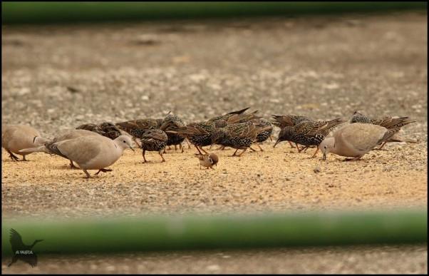 Variedad de avifauna comiendo (19-2-2016)