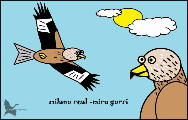 Milano real - Miru gorri