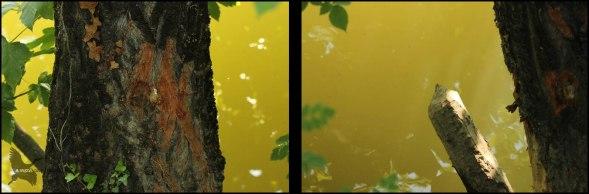 Rastros de castor (562016)