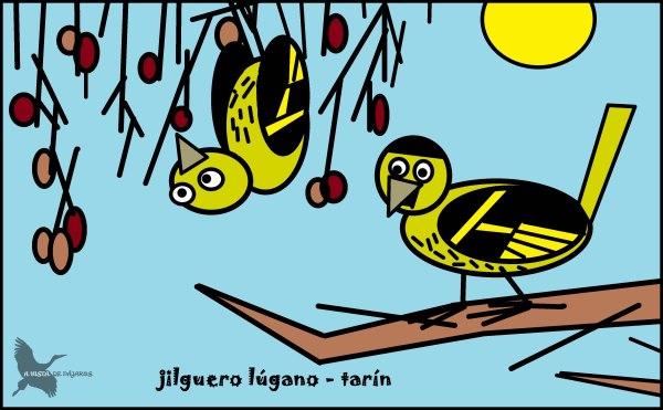 Jilguero lúgano - Tarín