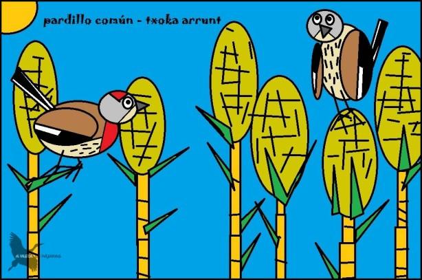 Pardillo común - Txoka arrunt