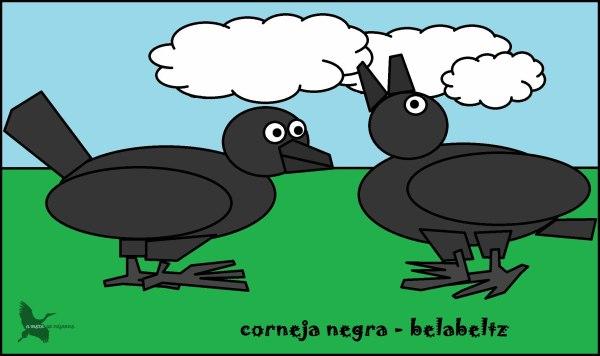 Corneja negra - Belabeltz
