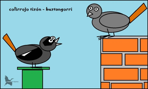 Colirrojo tizón - Buztangorri