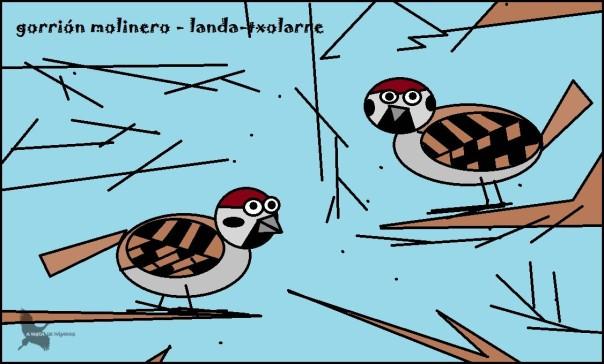 Gorrión molinero - Landa-txolarre