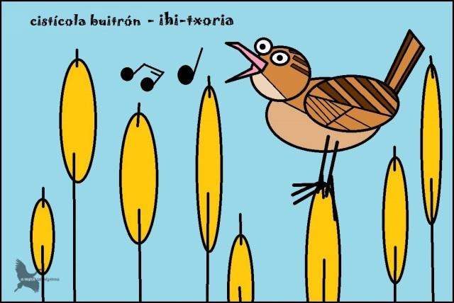 Cistícola buitrón - Ihi-txoria