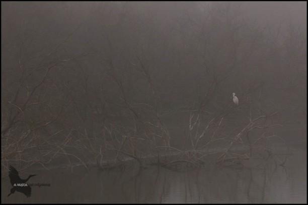 Garceta común entre la niebla (1-11-2016)