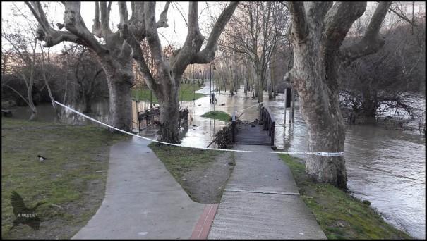 Paseo fluvial cerca de Curtiodres (17-1-2017)