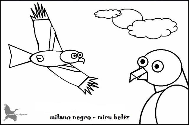 A vista de pájaros   Aves y otra fauna de Rotxapea, Pamplona y algún ...