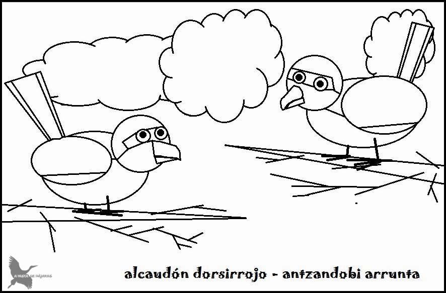 Garcilla Bueyera A Vista De Pájaros